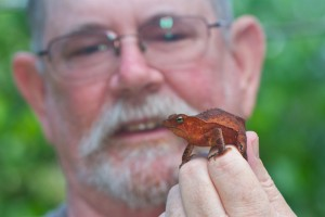 The author admires one of the many beautiful amphibians that were found.