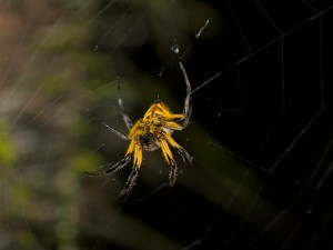 A colorful spider occupies it's niche.